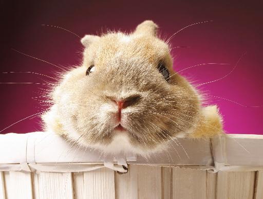 Cute fluffy animal.