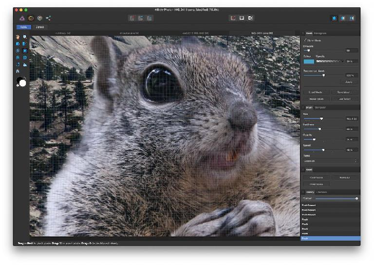 The squirrel wasn't angry or crazy enough, but liquify helped.