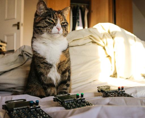 Synth cat loves pocket synths... naturally!